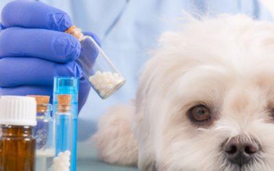Esposto all'Antitrast sui costi dei farmaci per animali